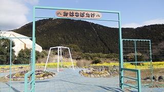 お花畑1.jpg
