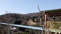 風車と木蓮のつぼみ.jpg