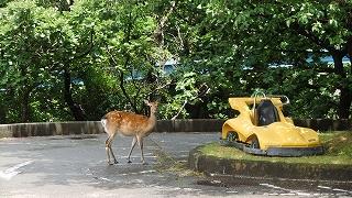 鹿カート.jpg